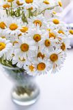 Bouquet of white daisies in a vase near the window, on a white background.  stock photo