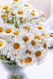 Bouquet of white daisies in a vase near the window, on a white background.  royalty free stock photos