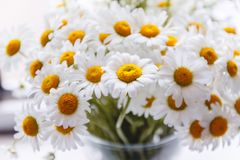 Bouquet of white daisies in a vase near the window, on a white background.  stock images