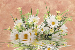 Bouquet of white daisies in water Stock Photography