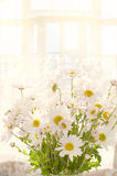 Bouquet of white daisies on the window Stock Photography