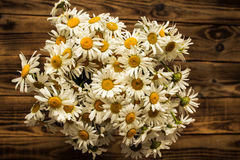 Bouquet of white daisies on wooden background Royalty Free Stock Photos