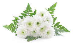 Bouquet of white daisy Stock Photo