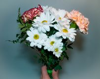 Bouquet with white Daisy flowers close at hand on a green background. Present for woman royalty free stock photo