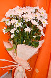 Bouquet of  white  daisy flowers on a  orange  background. Bouquet of  white  daisy flowers  and present card on a  orange background Stock Photography