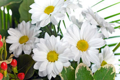 Bouquet of white flowers Royalty Free Stock Photos
