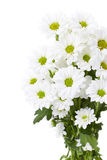 Bouquet of white flowers Stock Image