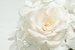 Bouquet of white flowers. On white background Royalty Free Stock Photography