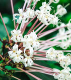 A bouquet of white flowers Royalty Free Stock Images