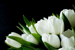 Bouquet of White Flowers on a Black Background Royalty Free Stock Photos