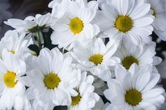 Bouquet of white flowers close up stock photo