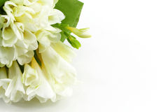 Bouquet of white freesias. A bouquet of white freesias, landscape cut, space for text on the right royalty free stock images