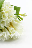 Bouquet of white freesias Stock Image