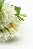 Bouquet of white freesias. A bouquet of white freesias, portrait cut stock image