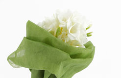Bouquet of white freesias, white background Royalty Free Stock Photo