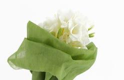 Bouquet of white freesias, white background. A bouquet of white freesias, landscape cut royalty free stock photo
