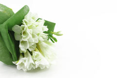 Bouquet of white freesias, white background. A bouquet of white freesias, landscape cut, space for text on the right stock images