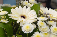 Bouquet of white Gerbera flowers  daisy Camomiles Royalty Free Stock Photos