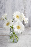 Bouquet of white gerbera flowers on wood Stock Photos