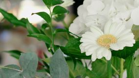 Bouquet of white gerbera, hortensia and green leaves as decor of wedding table stock video footage