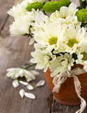 Bouquet of white and green chrysanthemums Stock Images