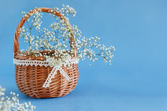 Bouquet of white gypsophila in the basket. Stock Photos