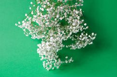 A bouquet of white gypsophila on a green background royalty free stock images