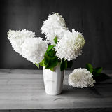 Bouquet of white hydrangea flowers on a dark grunge background. Stock Photo