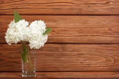Bouquet of white hydrangea in a glass vase Stock Photo