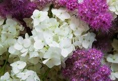 Bouquet of white hydrangea Stock Image