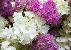 Bouquet of white hydrangea Royalty Free Stock Photo