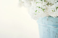 Bouquet of white lilac spring flowers Stock Photos