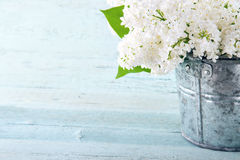 Bouquet of white lilacs Royalty Free Stock Image