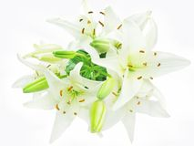 Bouquet of white lilies. White lilies isolated on white background Stock Photos