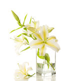 Bouquet of white lilies Stock Image
