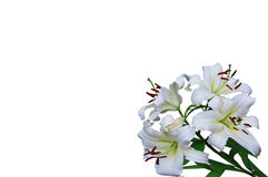 Bouquet of white lilies Royalty Free Stock Images