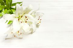 Bouquet of white lilies isolated on a white wooden background top view. Flowers lily beautiful bouquet white flowers floral backgr. Ound concept holiday stock photo