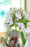 Bouquet of white lilly flower in the jar Royalty Free Stock Image