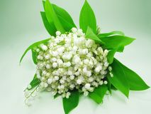 Bouquet of white lily of the valley Stock Image