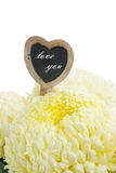 Bouquet of white mums Stock Photo