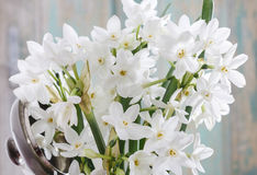 Bouquet of white narcissus Stock Photography