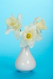 Bouquet of white narcissuses in a ceramic vase Royalty Free Stock Photography