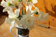 Bouquet of white narcissuses Royalty Free Stock Images