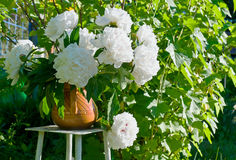 Bouquet of white peonies Royalty Free Stock Image