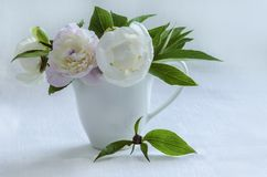 Bouquet of white peonies in vase on background of linen tablecloth. Stock Photos