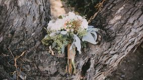 A Bouquet of White Petaled Flower Place on the Middle of Tree Trunk Stock Images