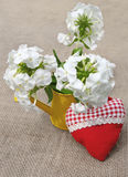 Bouquet of white phloxes Stock Image
