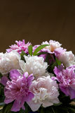 A bouquet of white and pink peonies. A bouquet of white and pink peonies in a brown background. Clear space Royalty Free Stock Images