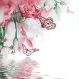 Bouquet of white and pink roses, butterfly. Stock Photos