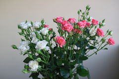 The Bouquet of white and pink roses on a gray background Royalty Free Stock Photos